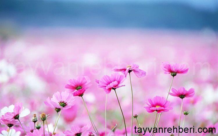 Hd Blumen Wallpapers Hintergrundbilder Blumen Wallpaper Blumen Und Hintergrundbilder