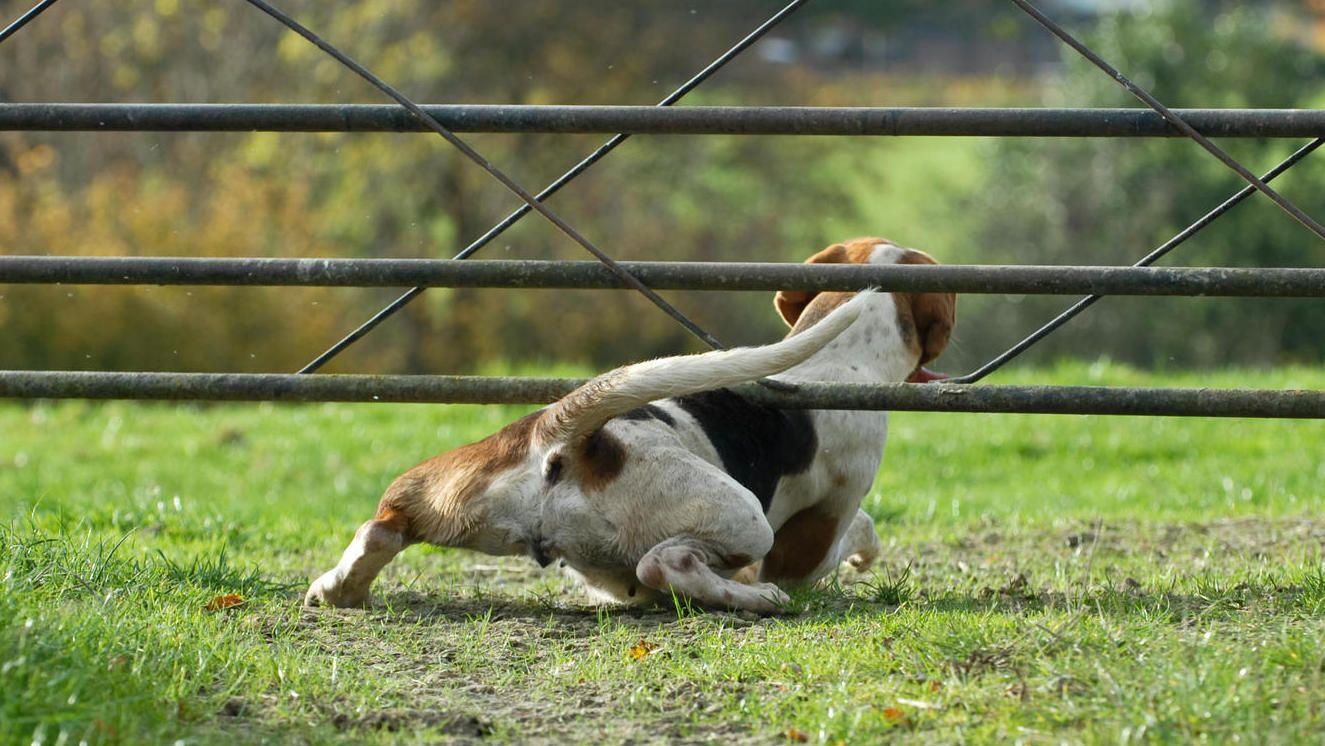 Hund entlaufen So reagieren Besitzer richtig Hunde