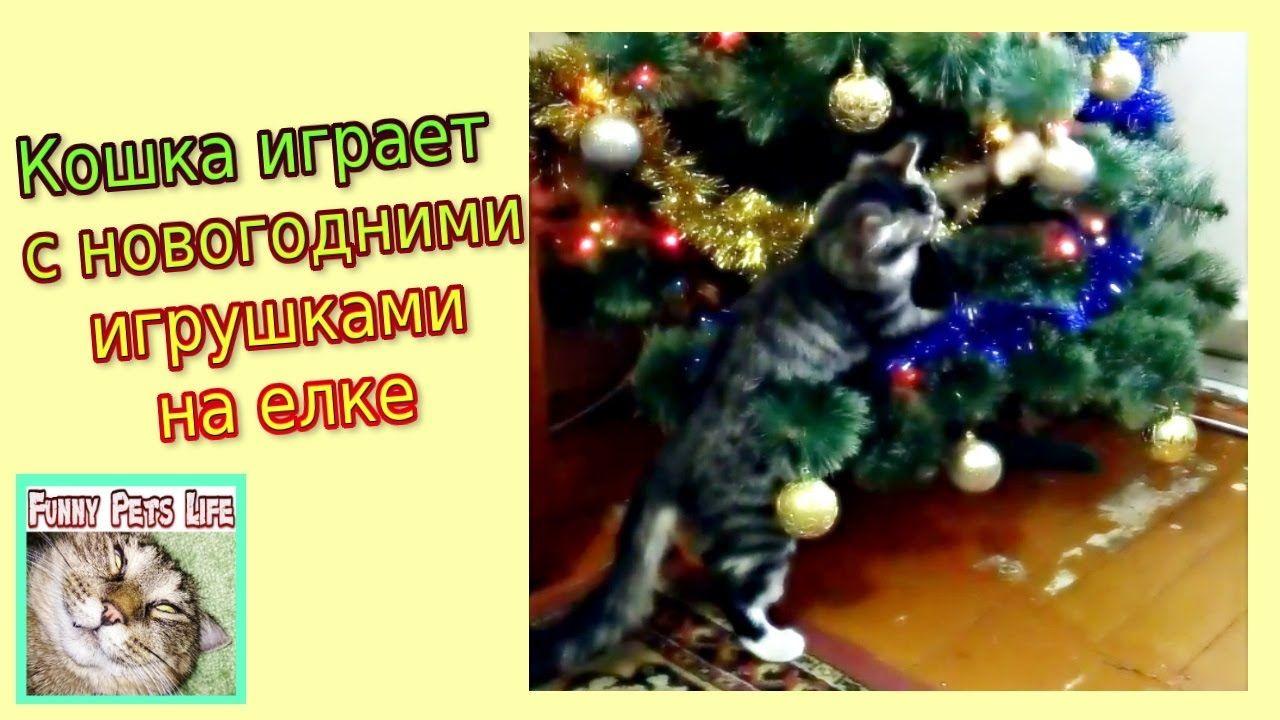 #Кот играет с игрушками на елке. #Кошка Кусачка. #Коты и # ...
