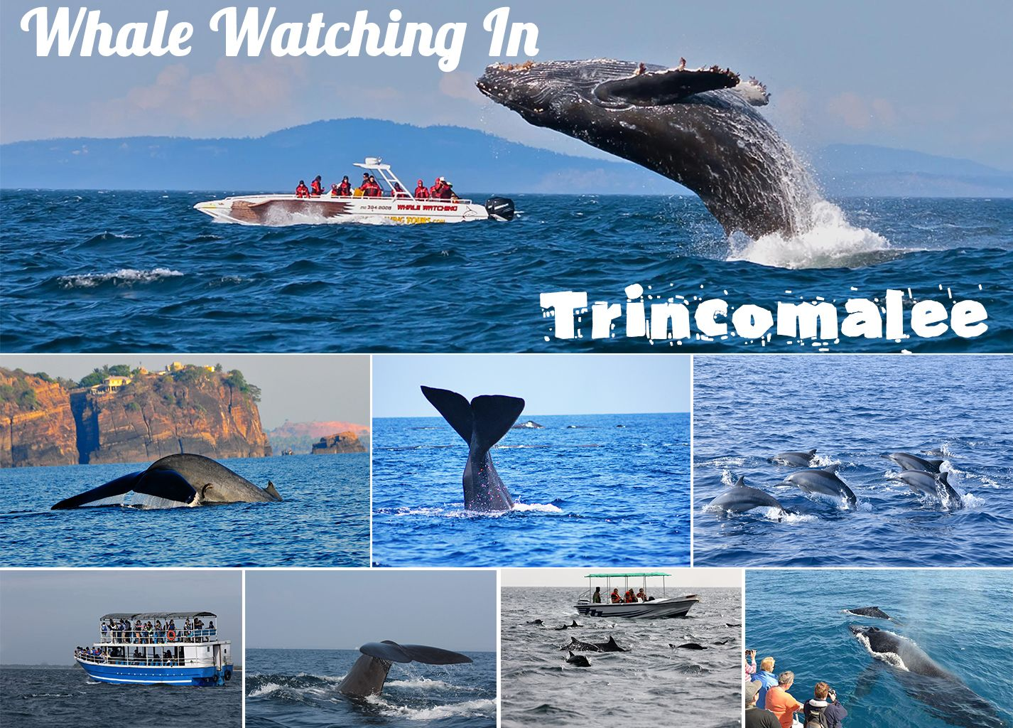 Trincomalee Whale Watching Tours Whale And Dolphin Watching Boat