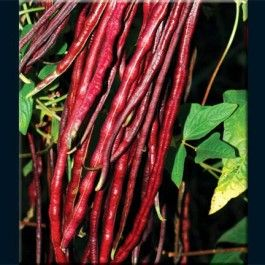 Chinese Red Noodle Bean Will Be Trying These This Year