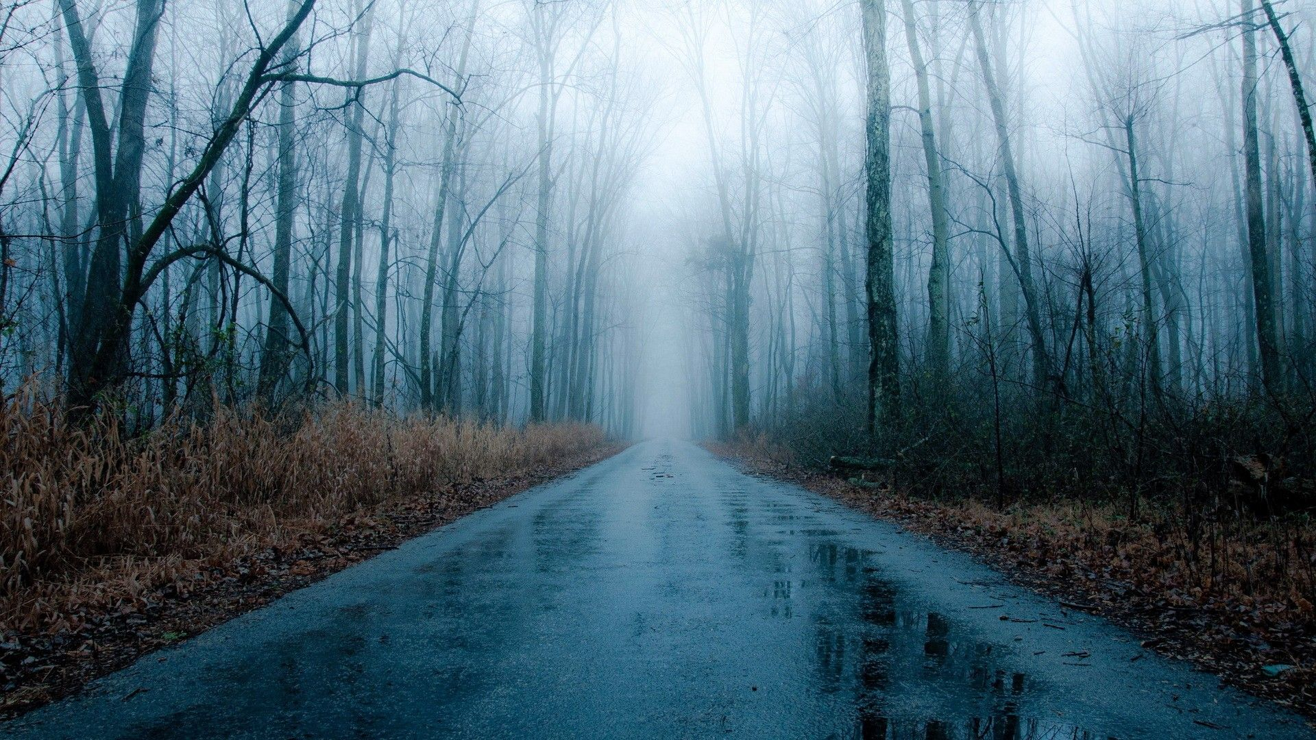 Foggy Rainy Road In Winter Rain Wallpapers Forest Road Foggy Forest