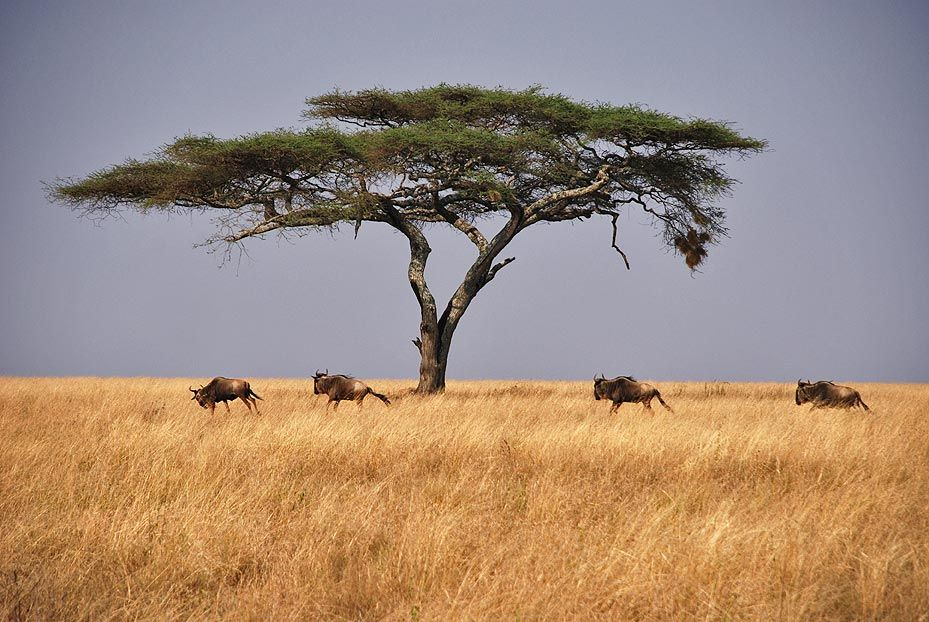 Serengeti (Tanzania). www.hojaderutas.com