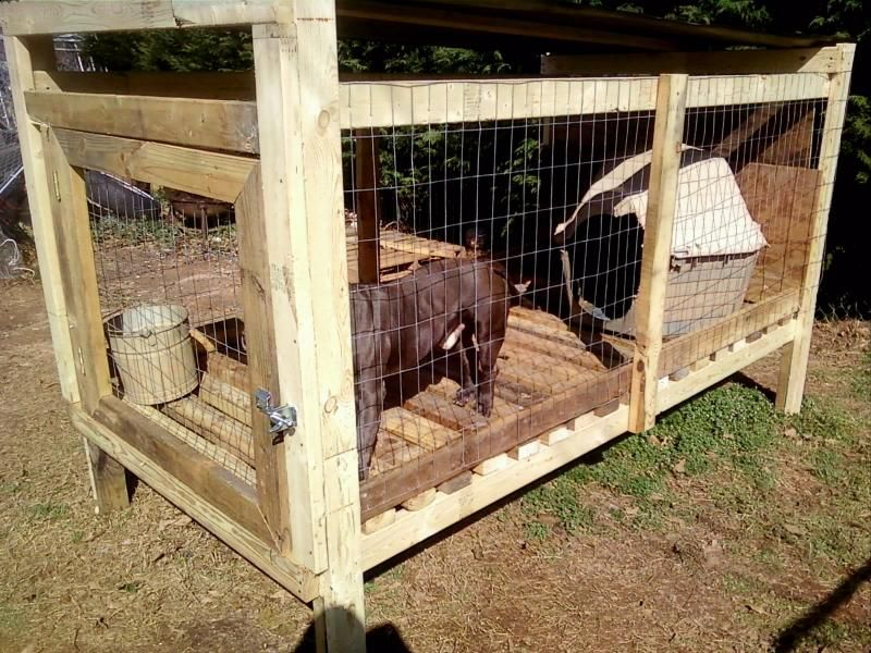 Indooroutdoor kennel setup kennel setup with plywood in