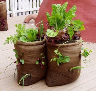 Container Gardening For Growing Food Container Gardening Garden