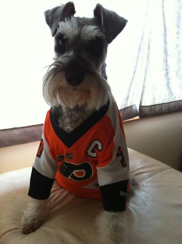Twitter fan  FlyersRage s dog Rocky is a Philadelphia Flyers fan.   HockeyPets 6b4ddb70c