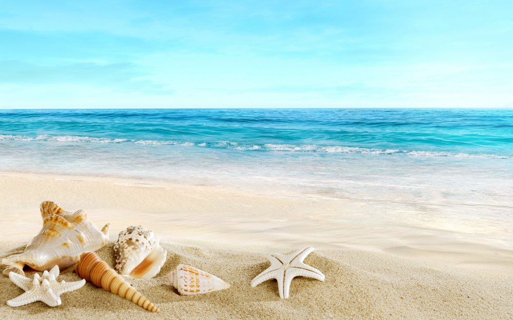 Download Wallpaper Sand Sea Beach Shell Beach Sand Seashells Section Nature In Resolution 2880x1800 Beach Wallpaper Beach Pictures Beach Landscape