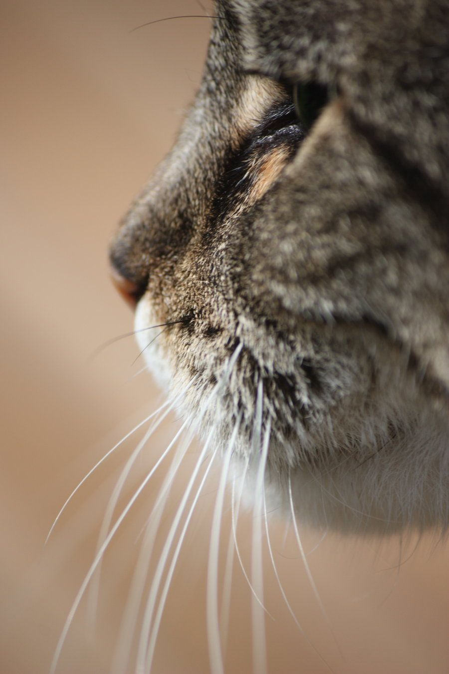 Permalink to Top Ten Cute Whiskers On Kittens