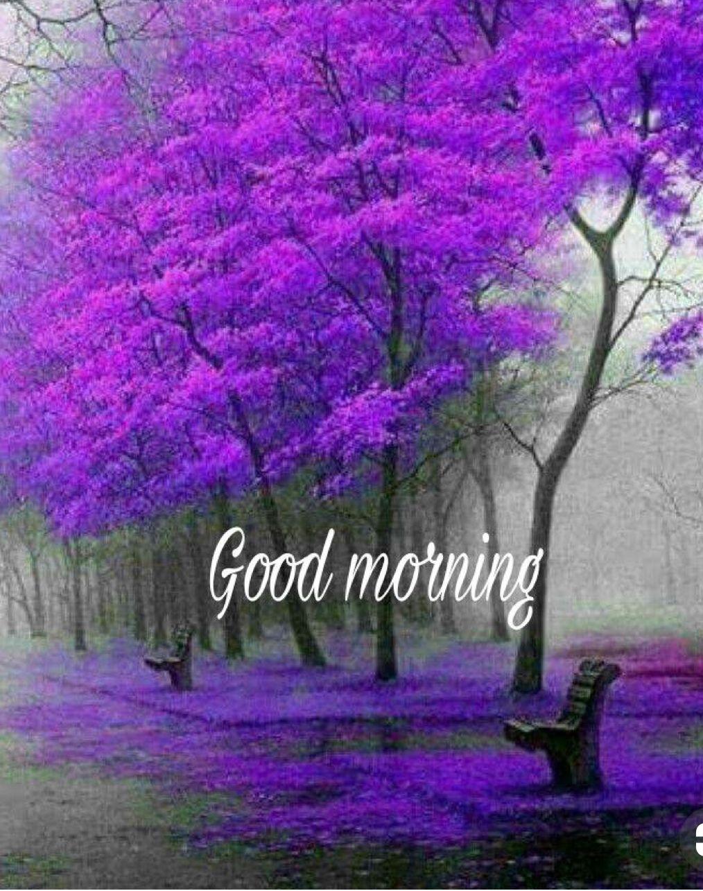 Good Morning Beautiful Nature Beautiful Tree Beautiful Landscapes