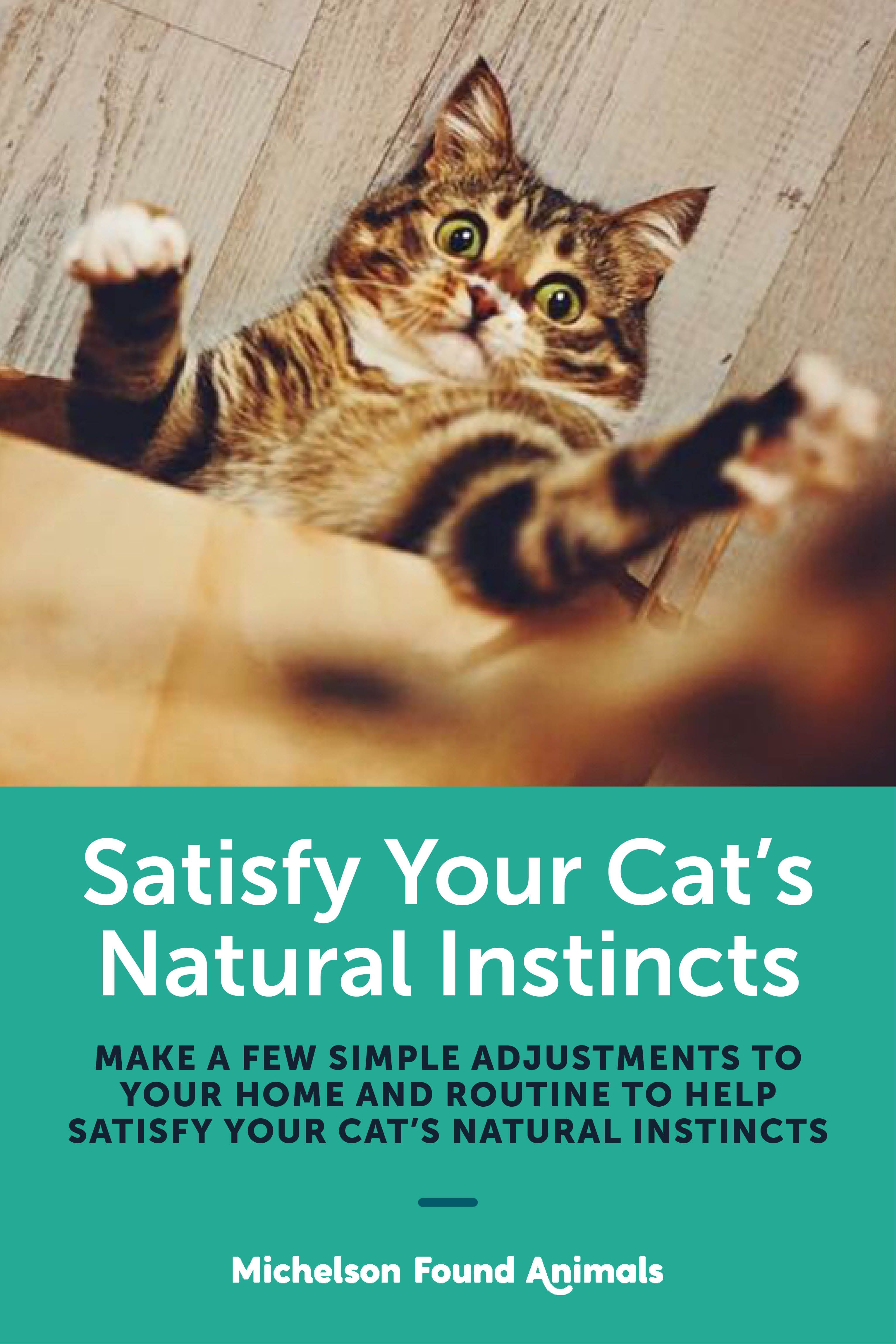 How to Satisfy Your Cat's Natural Instincts Michelson