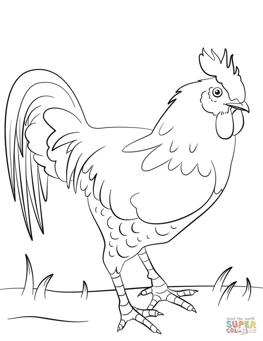 25 Brilliant Photo Of Rooster Coloring Page Chicken Coloring