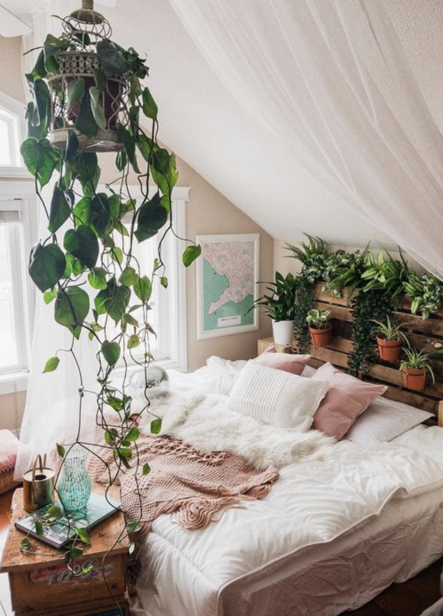 Hanging plants succulents urban outfitters bedroom decor inspiration