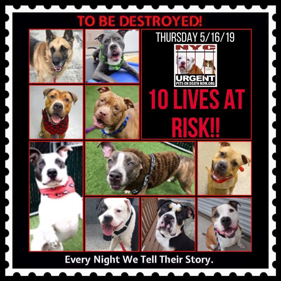 Dogs To Be Destroyed With Images Animal Shelter Quotes Dogs Dog Scrapbook