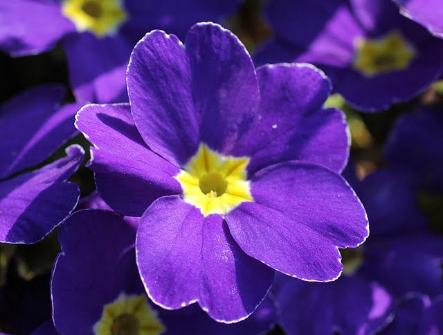 Beautiful purple flower with yellow center purple pinterest beautiful purple flower with yellow center mightylinksfo