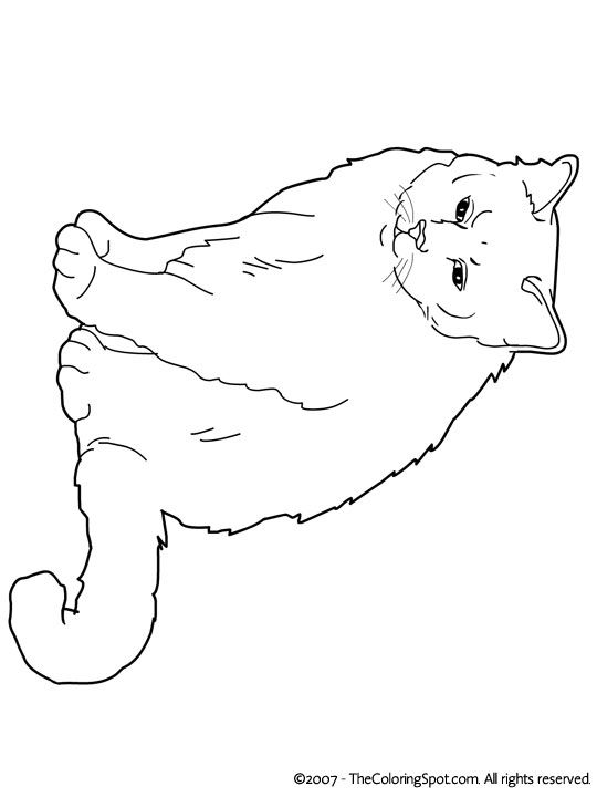 High Quality Cats Coloring Pages Birman.