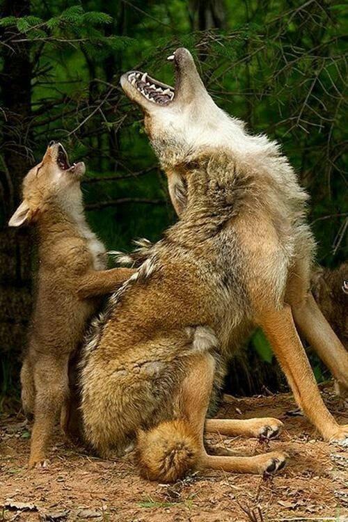 #animalcaptions