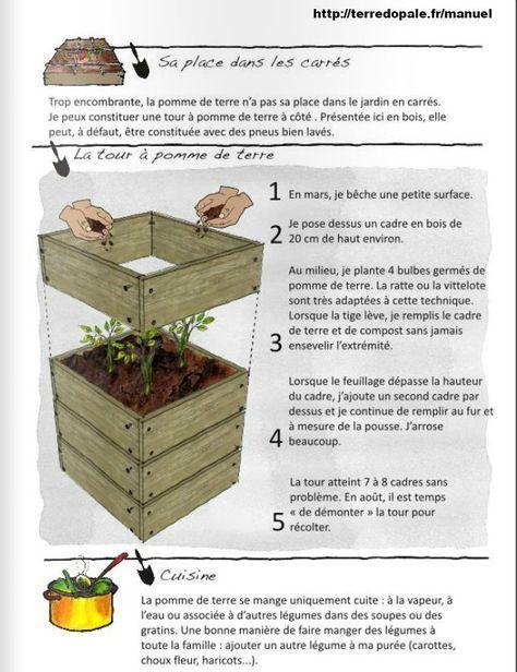 Tour Pomme De Terre : pomme, terre, Jardinage, Concombre, Masqué, Jardinier, Jardin, Carré,, Jardinage,, Potager