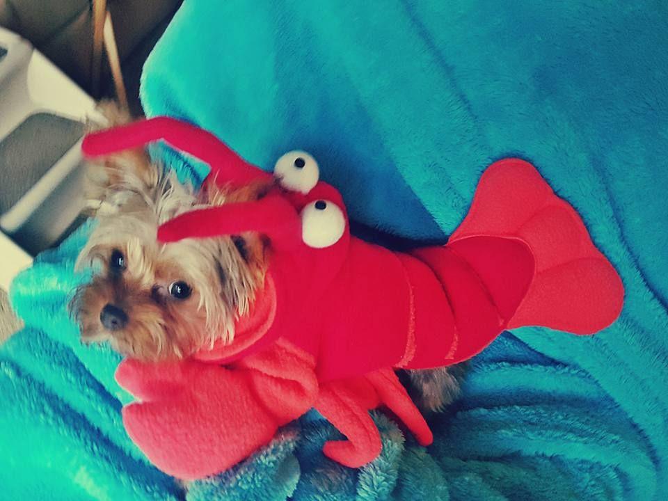 Reesie Rolo As Ariel Sebastian The Little Mermaid Puppy