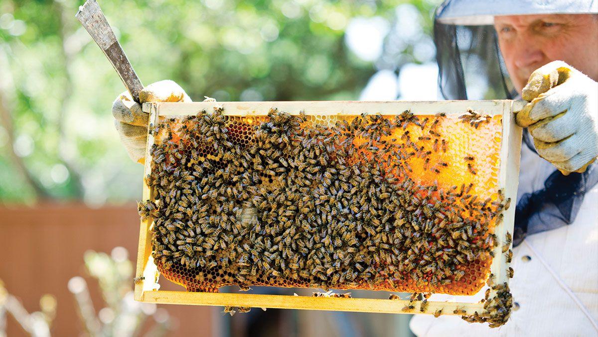 Beekeeping 101 Bee Keeping Bee Supplies Bee Hive