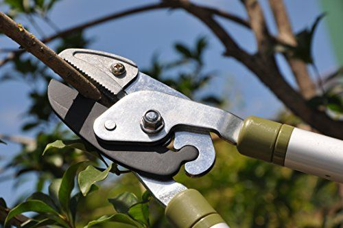 Worth Garden Long Reach Anvil Lopper Branches Trimmer Long Arm Pruner W Antirust Blade Extendible Handle N Ergonomic Soft Tpr Garden Garden Maintenance Pruners