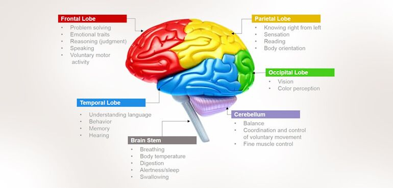 Human Brain Functions - Functioning of Human Brain with ...