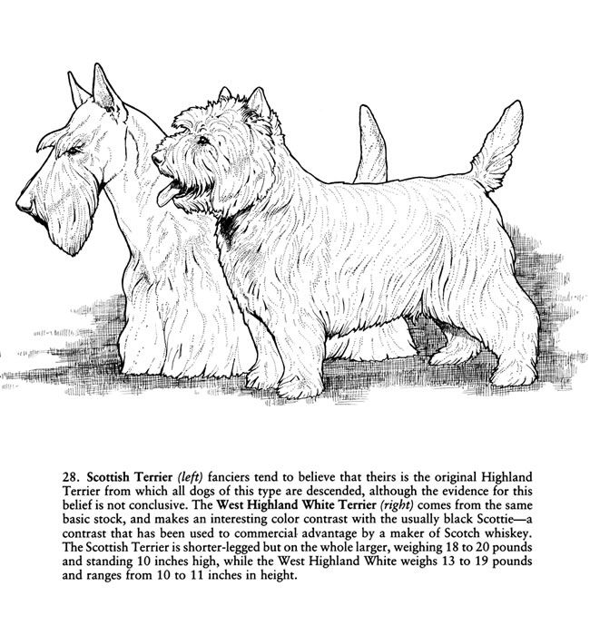 from Favorite Dogs Coloring Book by Dover, free download. Reference ...