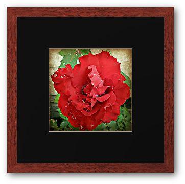 Weeping Rose by DianaMatisz