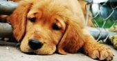 Pet Devotee  12 Warning Signs Of Cancer In Dogs That Every Owner Should Know
