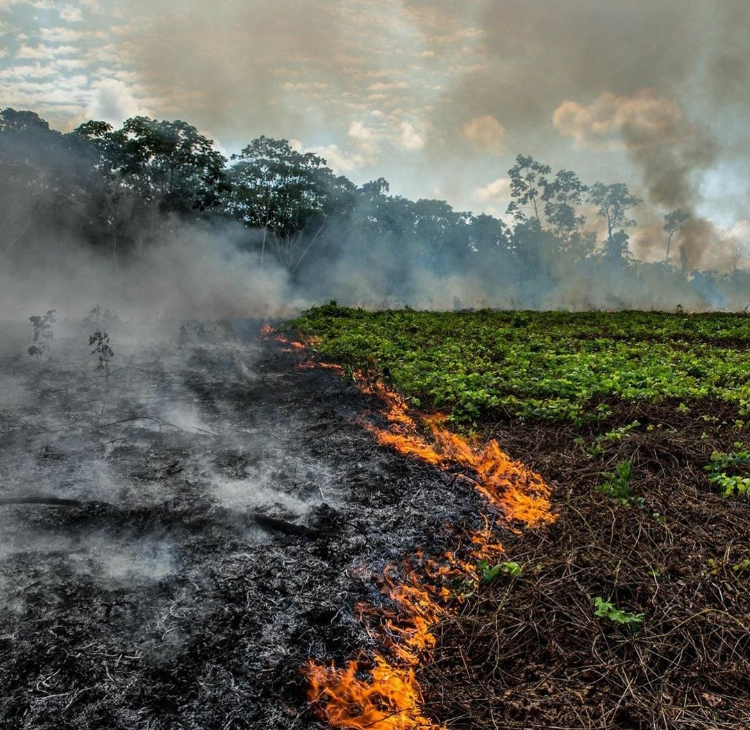 Amazon Rainforest Fire In Brazil Current Affairs 2019 Video 2019