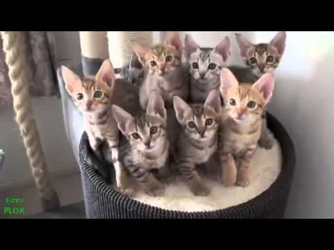 best funny cat videos compilation 2013 new hd cts pinterest