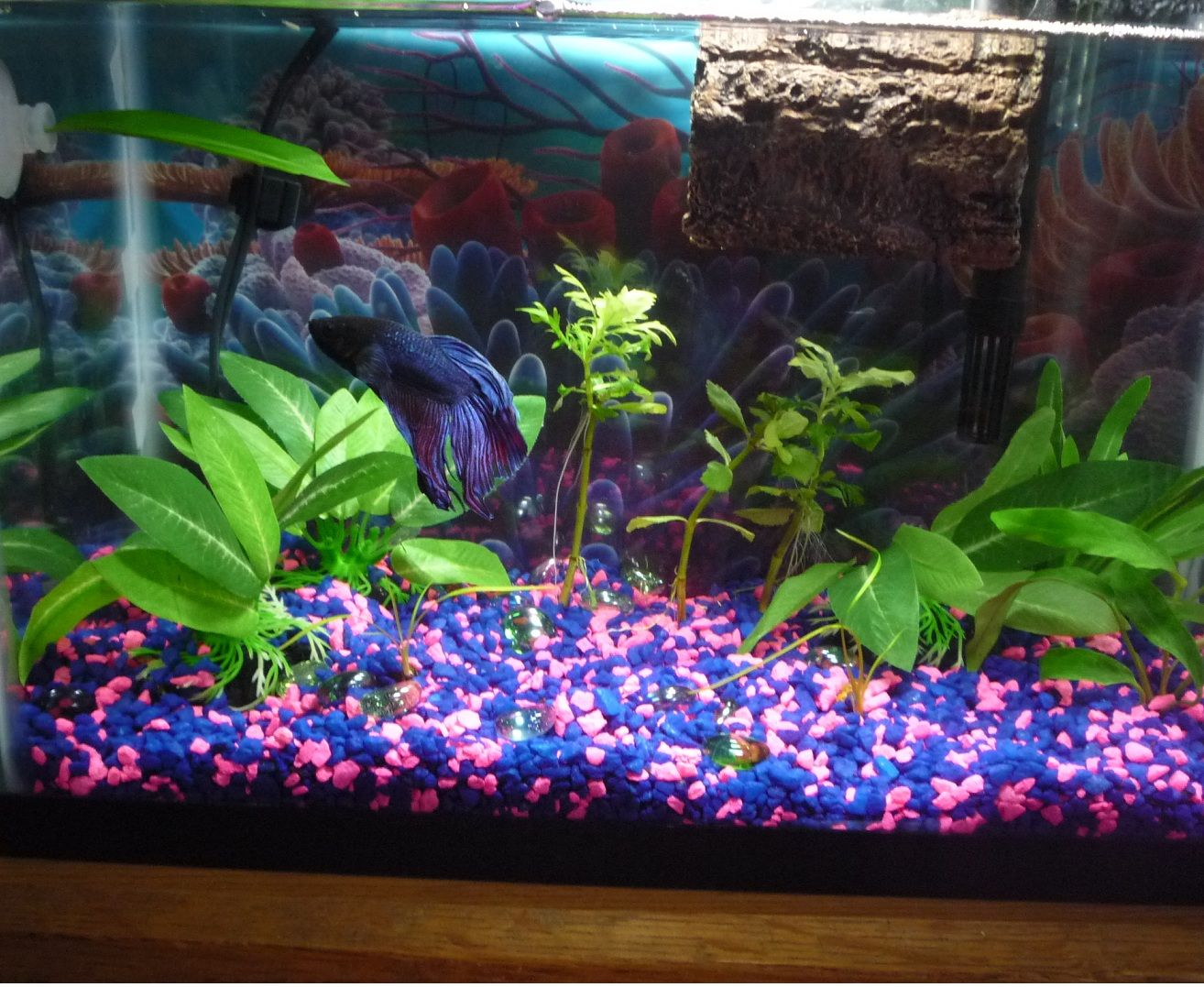 Betta Fish Bowl Decorations Interior Home Accessories  Aquarium  Pinterest  Aquariums And