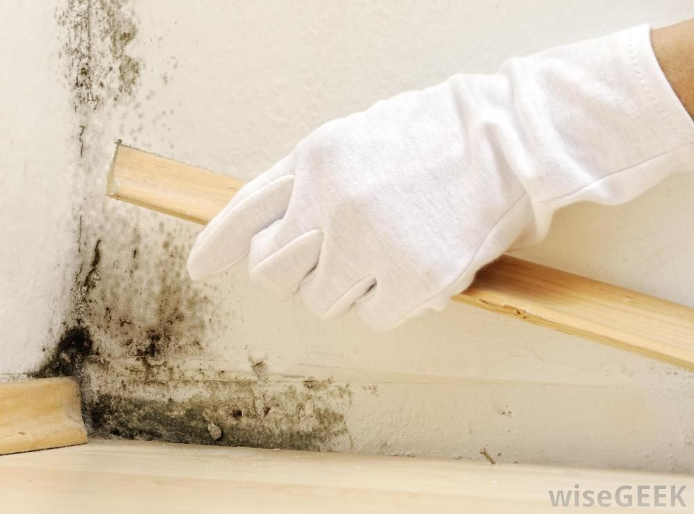 How to Perfectly Get Rid of Mold and Mildew Once and For
