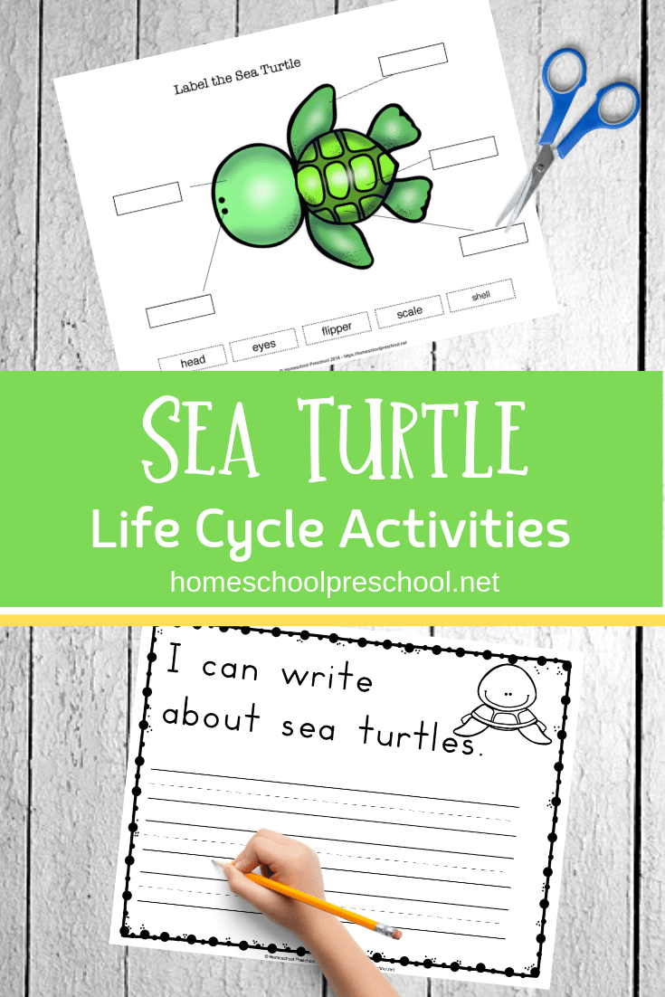 Preschool Sea Turtle Life Cycle Printable Unit Study Turtle Life Cycle Sea Turtle Life Cycle Life Cycles [ 1102 x 735 Pixel ]