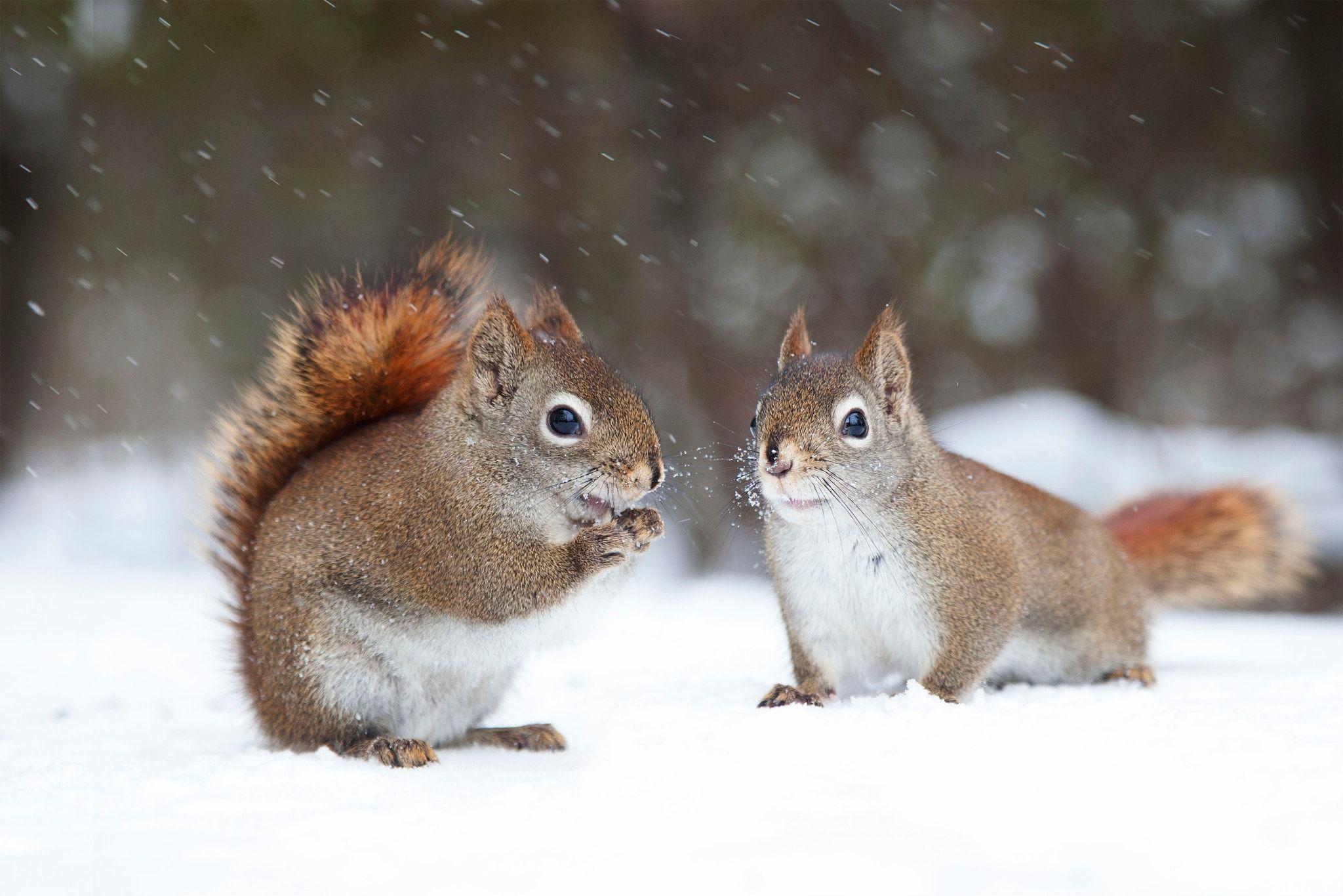 """Résultat de recherche d'images pour """"écureuille"""""""