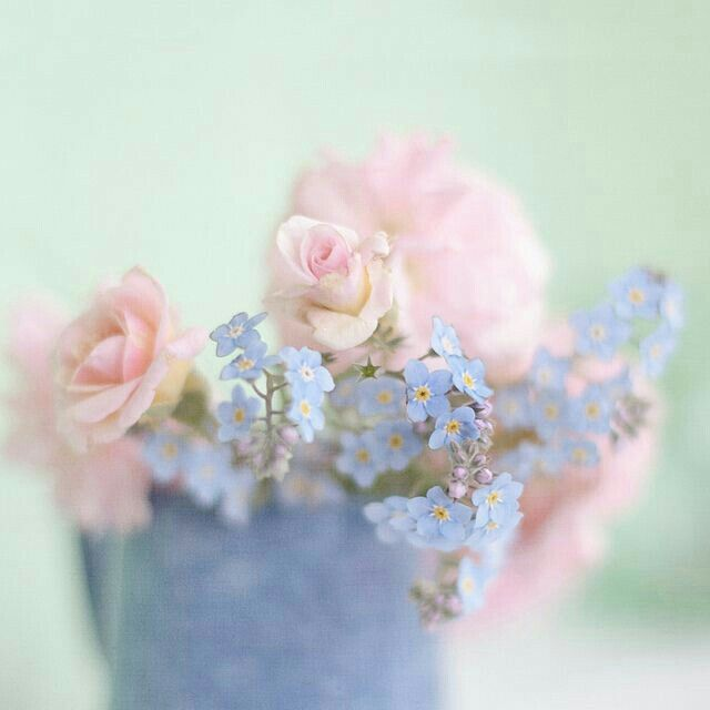 Pin by Blue Roses on Beautiful Roses Pinterest