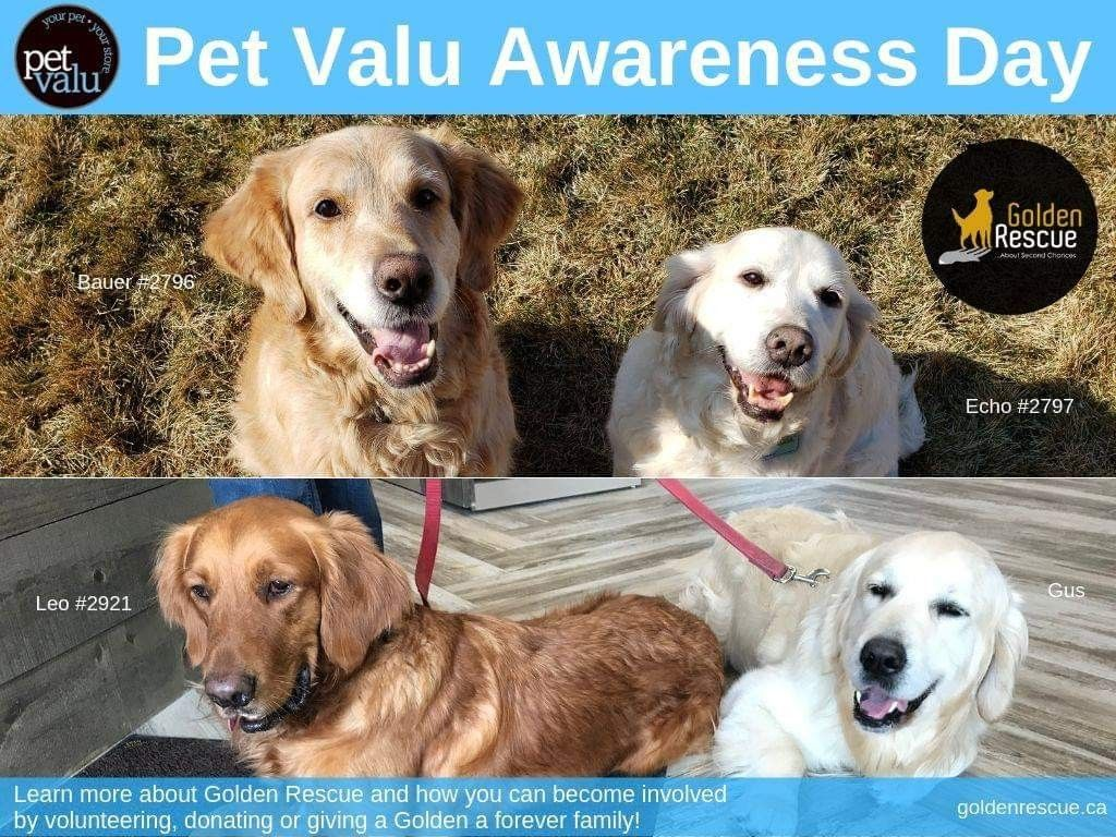 Golden Rescue Will Be At Pet Valu At The Roundhouse Centre In Windsor On Saturday June 8th From 11am 1pm Stop By And Meet Bauer 2796 Pets Animals Rescue Dogs