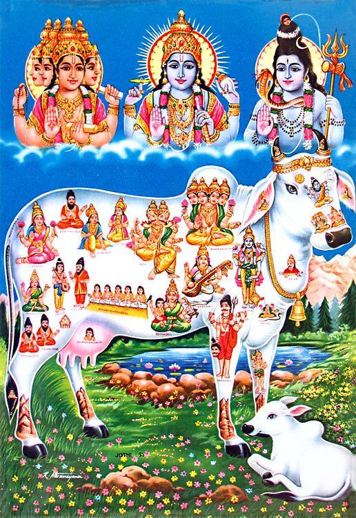 Kamadhenu - the sacred cow | raja yoga in 2019 | Lord vishnu, Lord