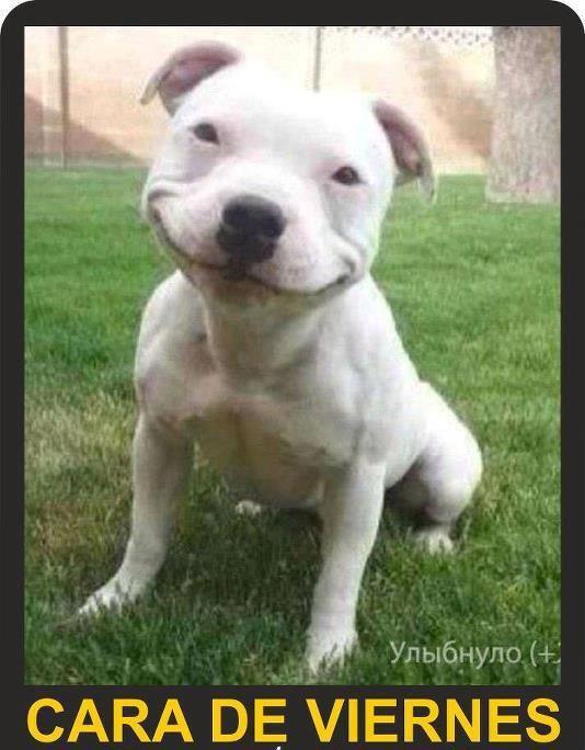 Memes En Espanol Buscar Con Google Memes Perros Mascotas Memes Imagenes Divertidas De Animales