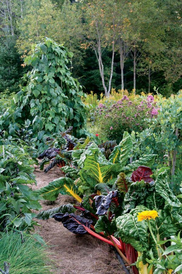 garten schön gestalten - unterschiedliche pflanzen arten