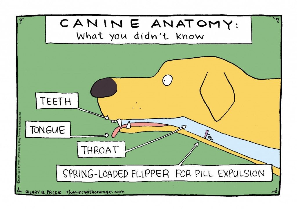 Canine Anatomy: What You Didn\'t Know | Rhymes With Orange | Paw ...