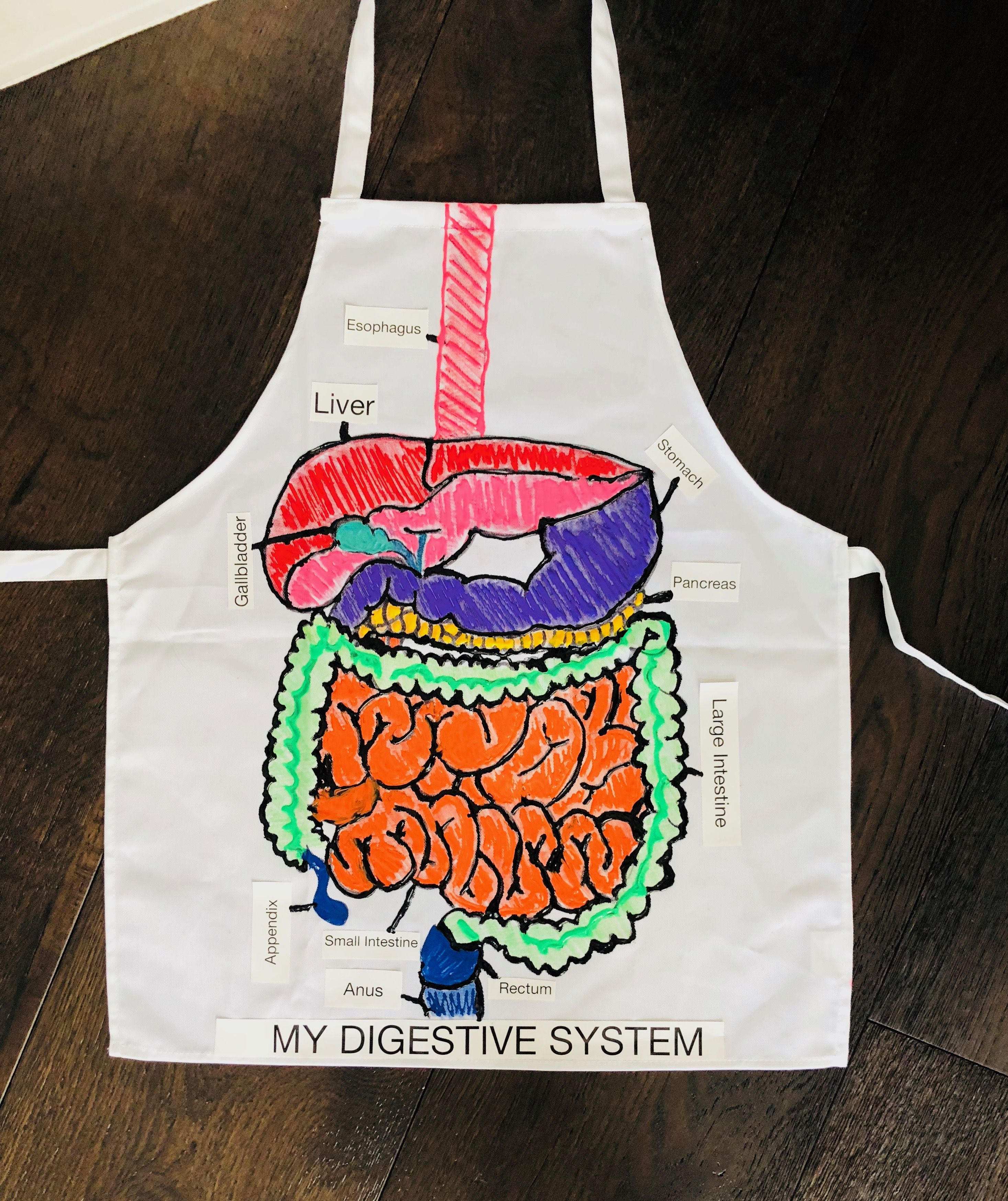 Kids Digestive System Diy Science Project Diy Science Projects