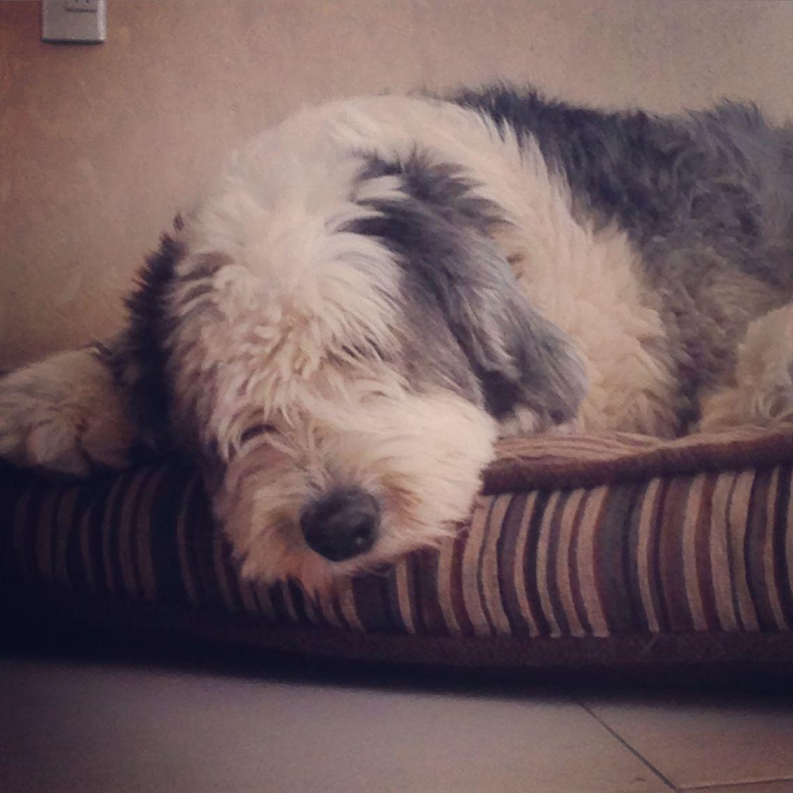 17 mejores ideas sobre antiguo pastor ingles en pinterest for Estanque para perros