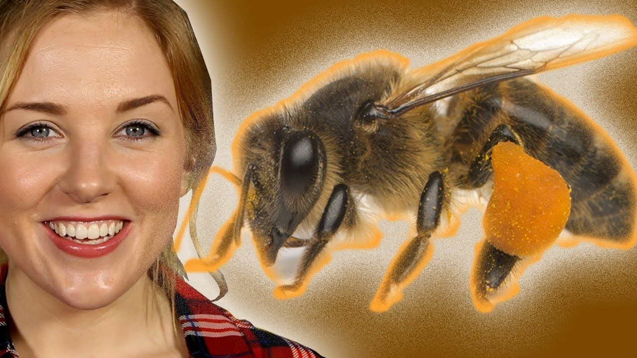 What If Bees Went Extinct Zoo La La Earth Unplugged Bee