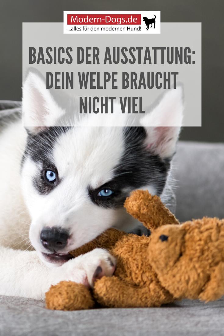 Erstausstattung Von Welpen Das Braucht Dein Hund Unbedingt In