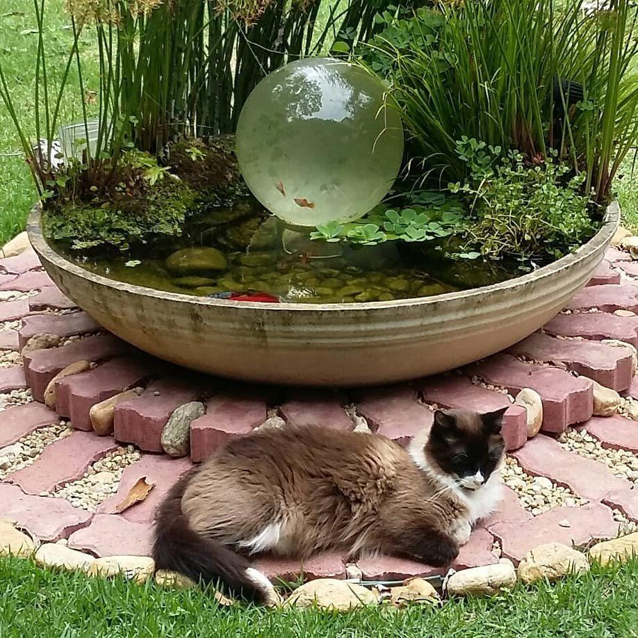 Master Yoda Aka Pangui Cat Day Beauty Hacks That Work Cat Life