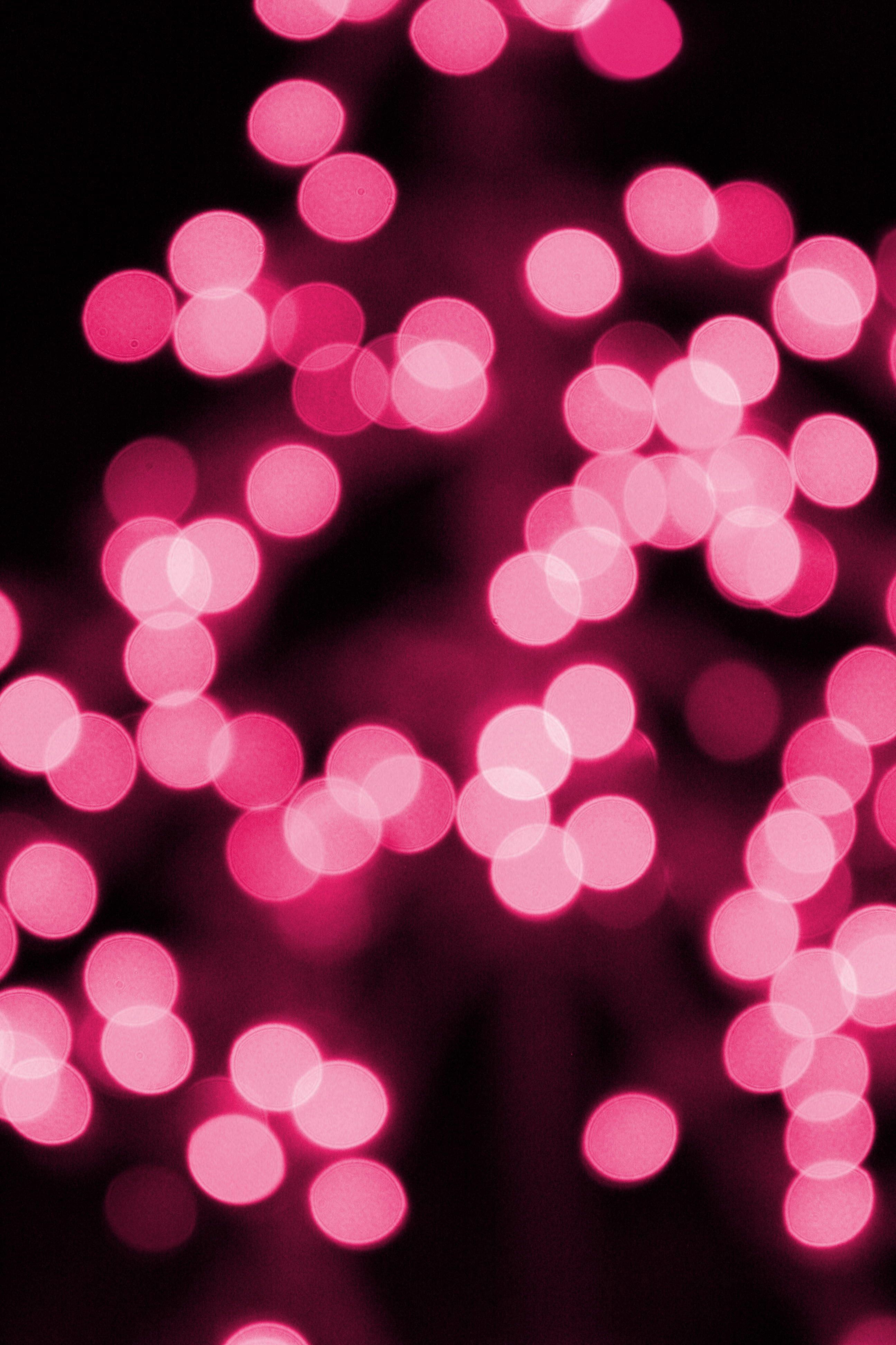 Pink Christmas Lights Picture