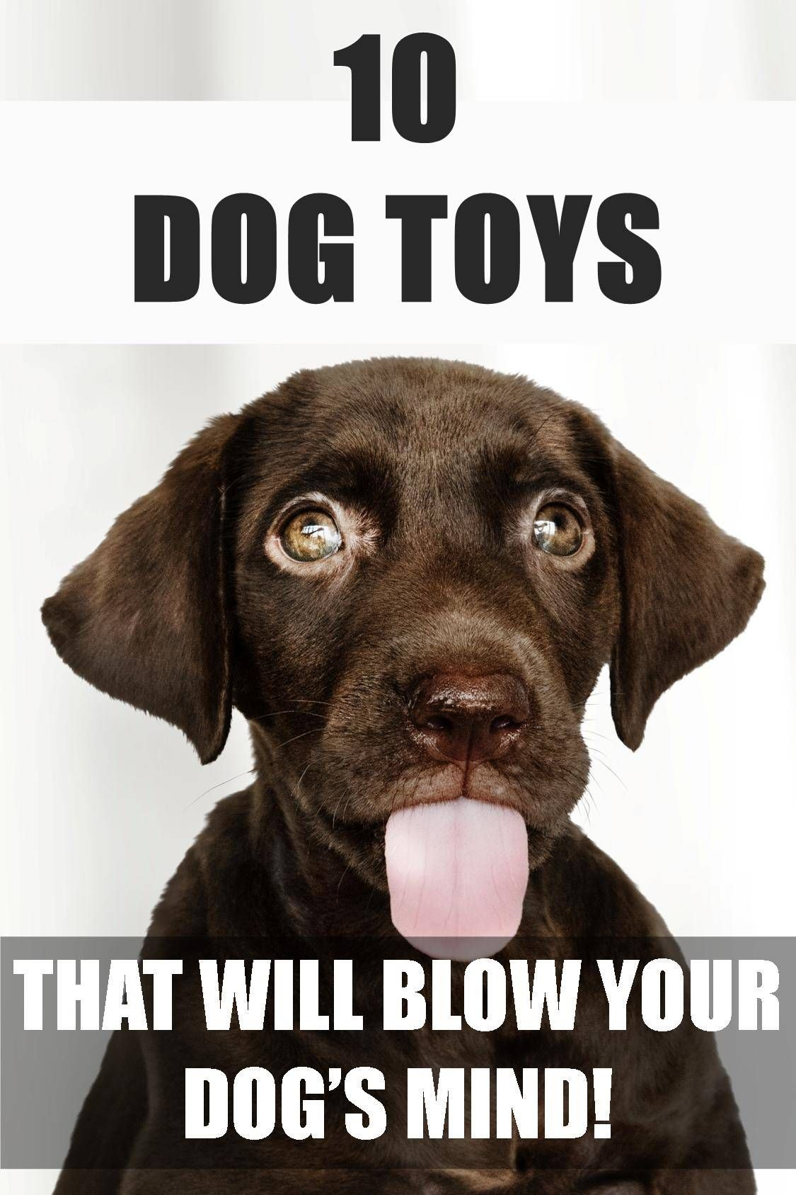 10 Best Dog Toys to Keep Your Dog Busy For Hours Best