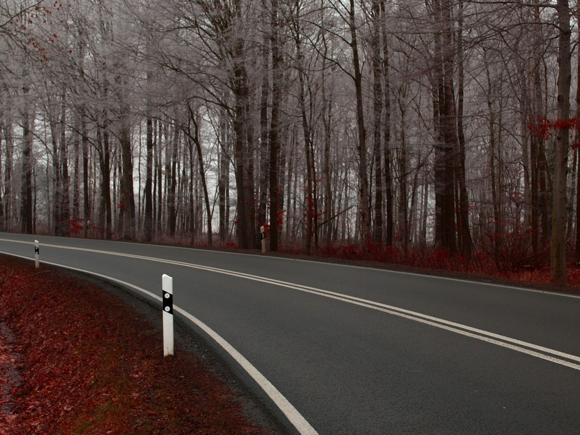 Beautiful Scenery Of Nature An Extremely Clean Road White Trees Alongside Is Looking Good 1920x1440 Free Wallpaper Download Beautiful Roads Road Background Wallpaper long road trees path marking