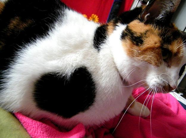 Catsparella: 21 Cats With Fur Hearts