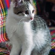 How To Get Spoiled Milk Out Of A Rug Recipes Cat Urine